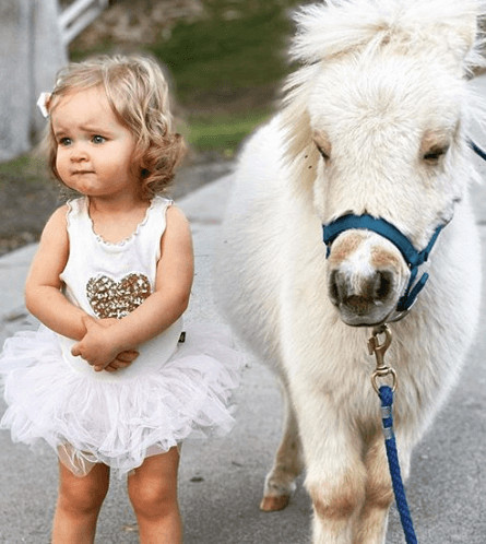 With mini horse